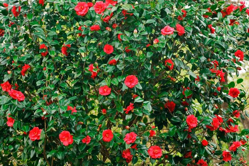 15 Növény a délnyugati kertek számára