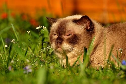 Macska távoltartása a kertből